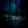 The Stream, Dark Forest Series