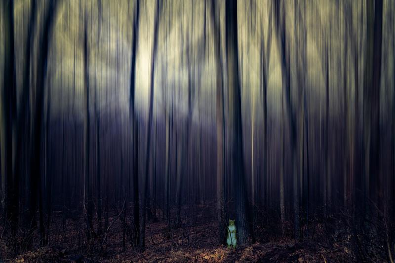 Squirrel's Forest