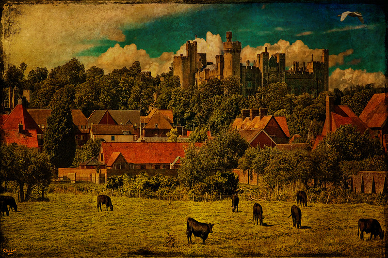 Arundel Castle and Cows