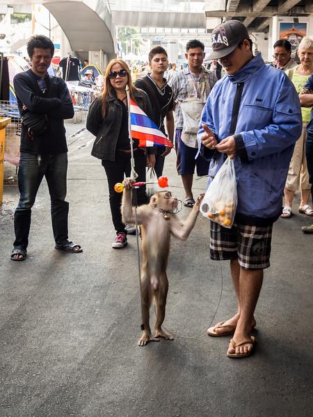 Protester Monkey, Bangkok