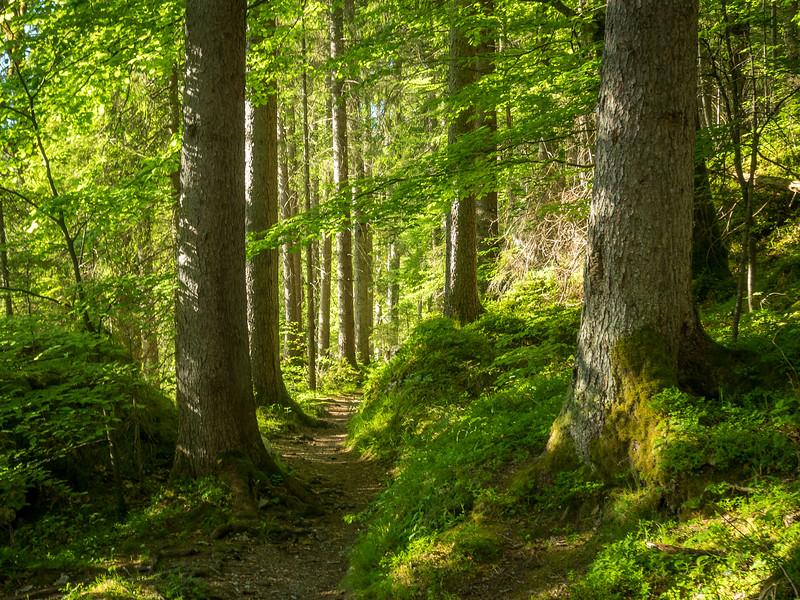 Green Trail around Eibsee, Germany