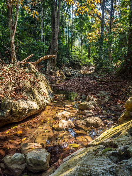 Jungle Stream, Laos