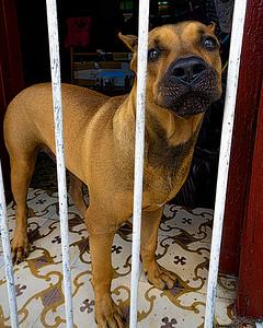 Puppies Of Cuba