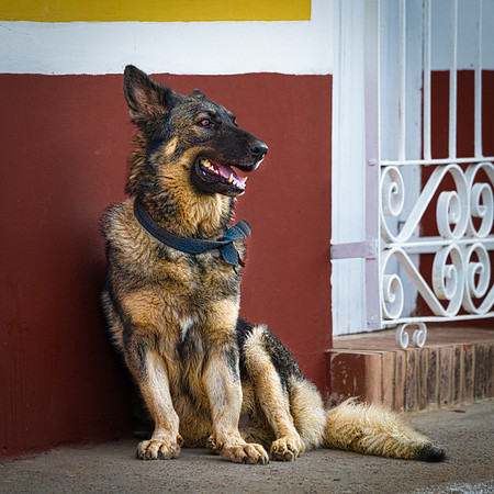 Puppies Of Cuba