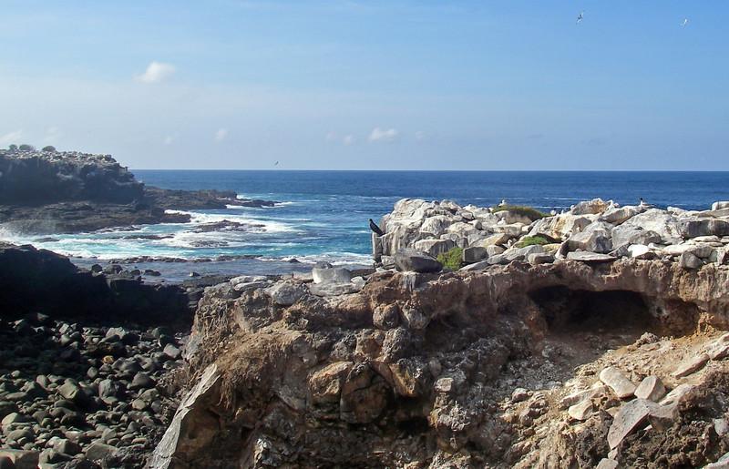 Booby Breeding Site, Española, Galapagos