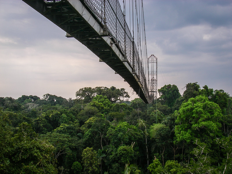 The Canopy Walk, Yasuni Rainforest, Ecuador