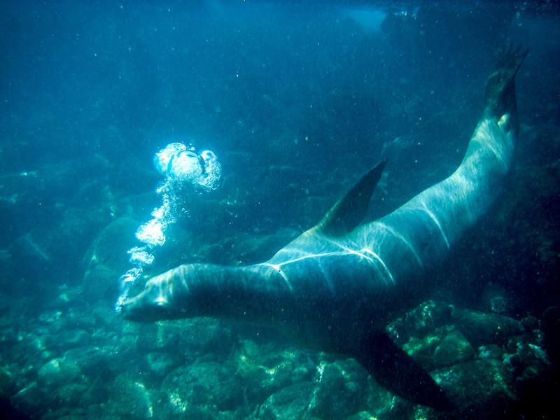 Lobo del Mar, Santa Fe, Galapagos