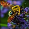 Nectar Bandit