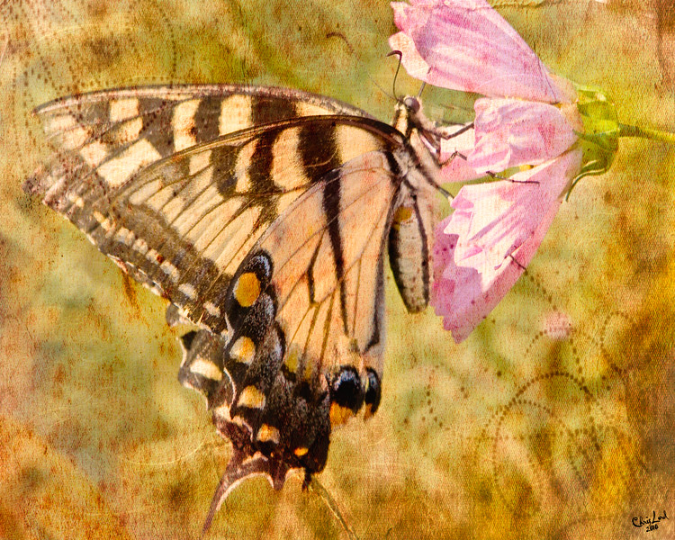 A Tiger Swallowtail Butterfly with Texture Layers