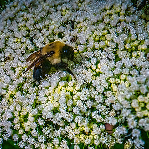 Bee In Paradise