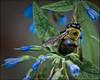 Bee Seen