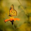 Battery Park Butterfly