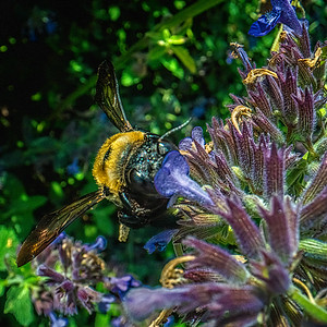 Bee Universe