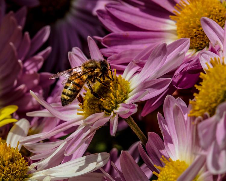 Bee World