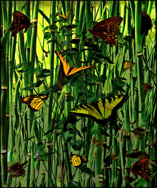 Butterflies and Bamboo, A Fantasy Creation