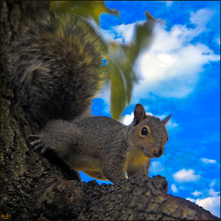 Squirrel Looking On From Tree Branch