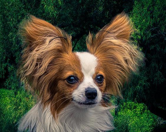 Long Eared Doggie