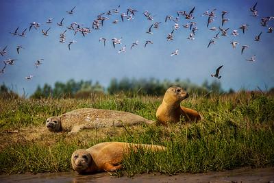 Riverside Seals