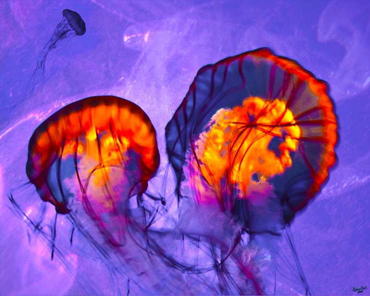 Alien Lifeforms? No Just Jelly Fish