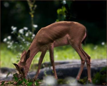Oh Dear Deer!