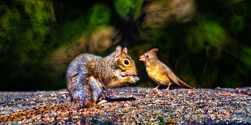 Woodland Friends