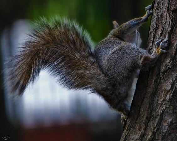 Squirrel, Leaving