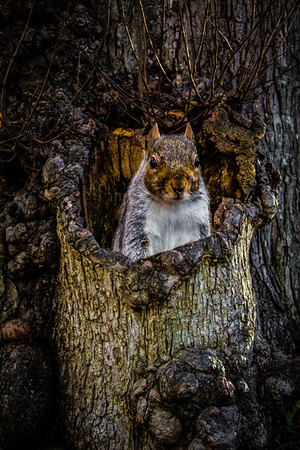 Pop Up Squirrel