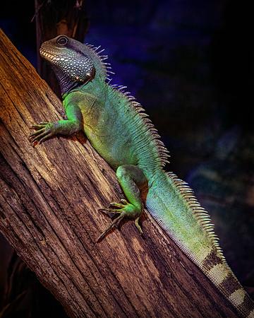 Reggie The Reptile