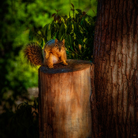 Balboa Park Squirrel