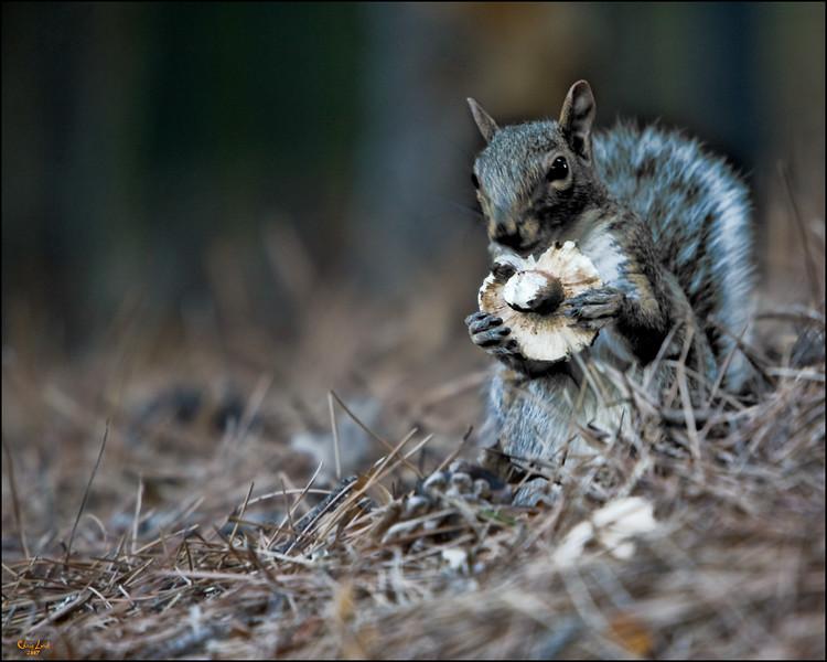 Squirrely Mushroom Eater