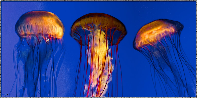 Jelly Dancers