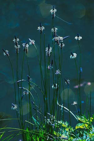 Grass Halos