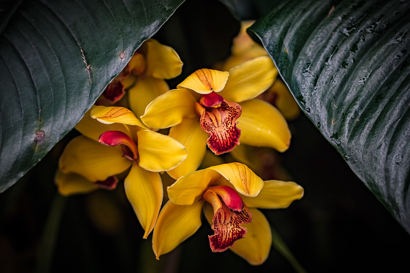 Orchids Under Cover