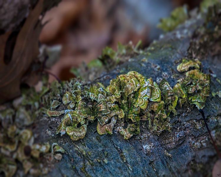 Fungus Log