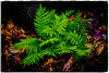Spring Forest Ferns