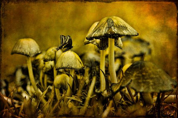 Fungus World