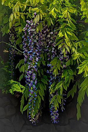 Wisteria Paintography