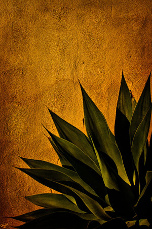 Agave and Adobe at Sunset