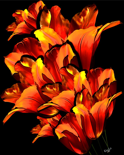 A Fantasy Of Tulips