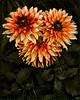 Floral Triplets