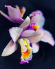 Soft Focus Orchids