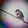 Another Bird On Another Wire