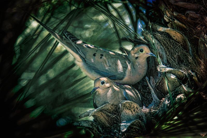 Love a Dove Dove