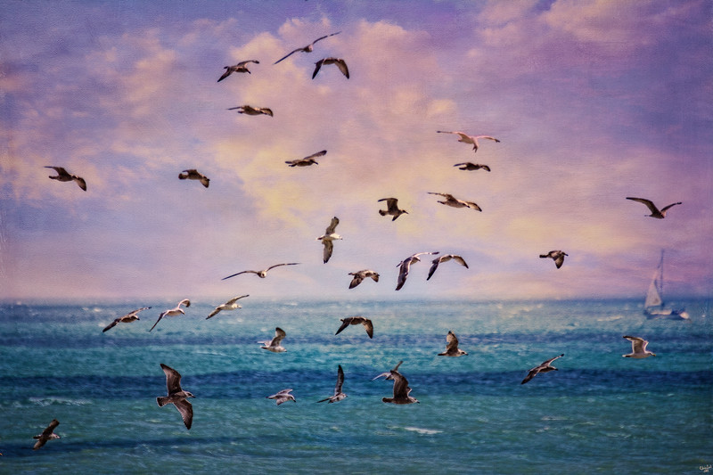 """Gulls """"Paintography"""""""