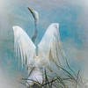 The Angelic Egret