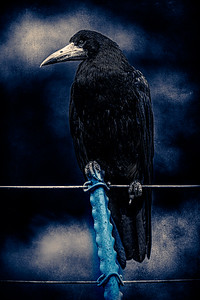 """Quoth The Raven """"Never More"""""""