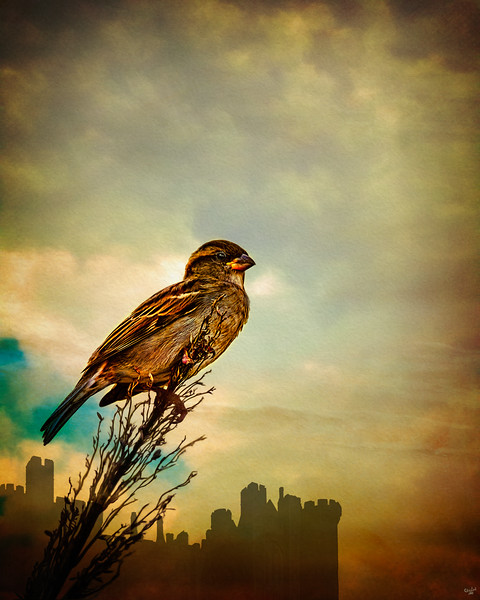 A Sparrow On The Castle Grounds