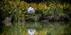 Exotic Egret