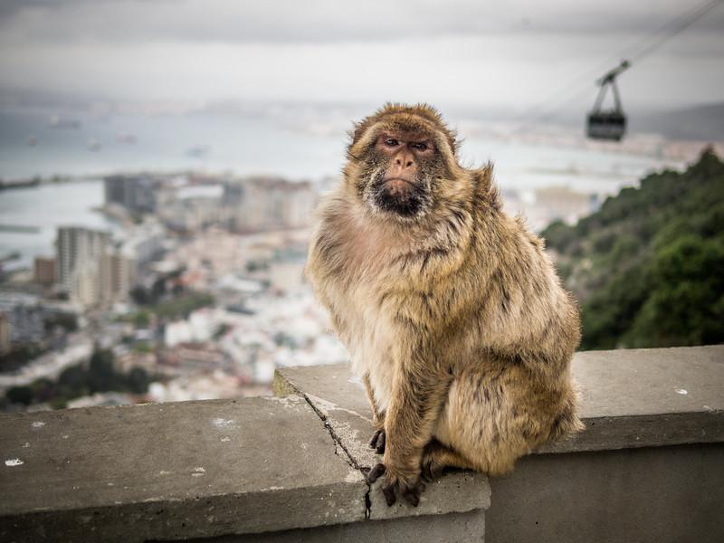 Well, I Say..., Gibraltar