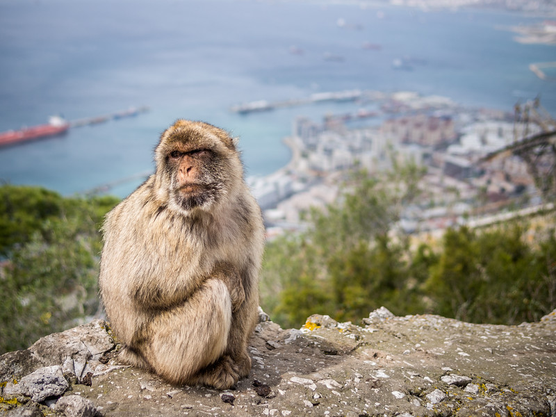 Bored of the View, Gibraltar